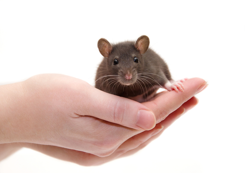 Potential Myastenia Gravis Therapy, PRTX-100, Again Seen to Reduce Disease Activity in Mouse Model