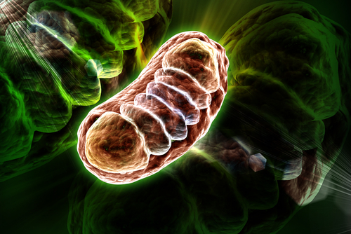 Mitochondria Defects in Immune Cells May Cause MG, Study Says